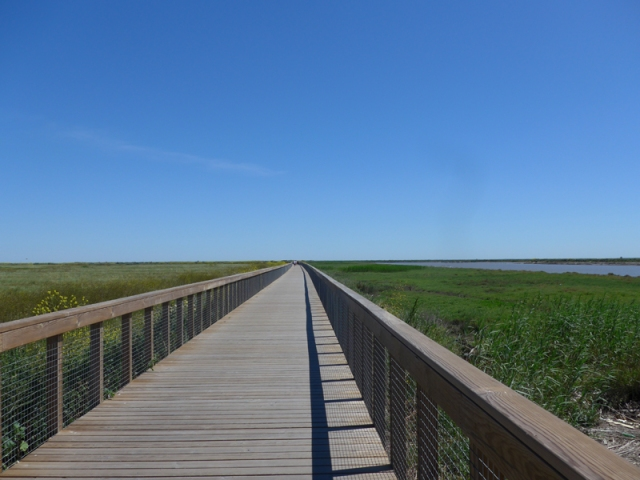 Raised timber walkway through wild riverside scrubland at Tagus Linear Park between Sacavem and Alverca do Ribatejo