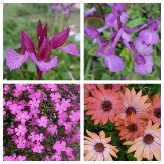 flower pic 10