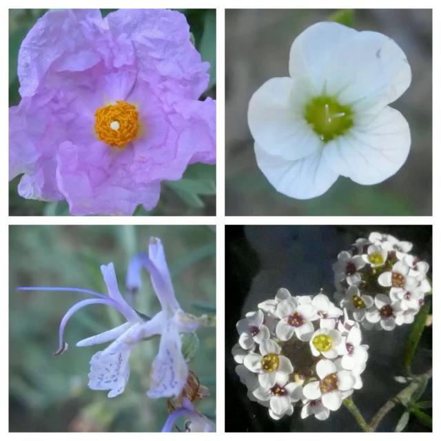flower pic 2