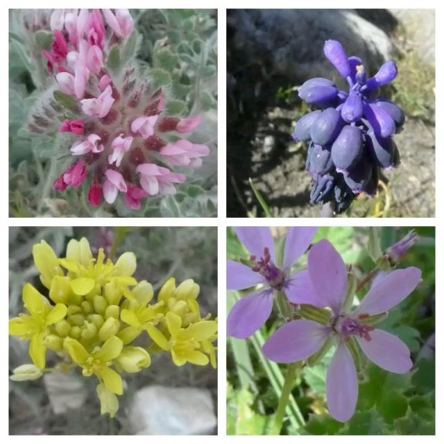 flower pic 4