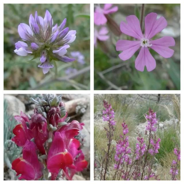 flower pic 6