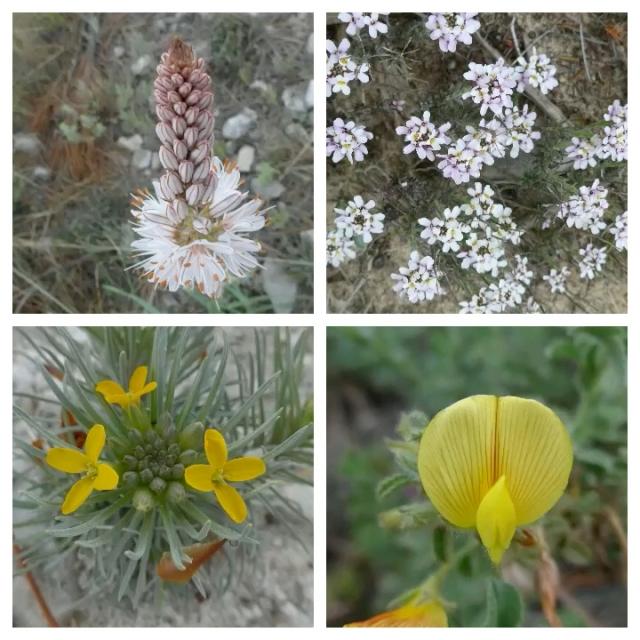 flower pic 7