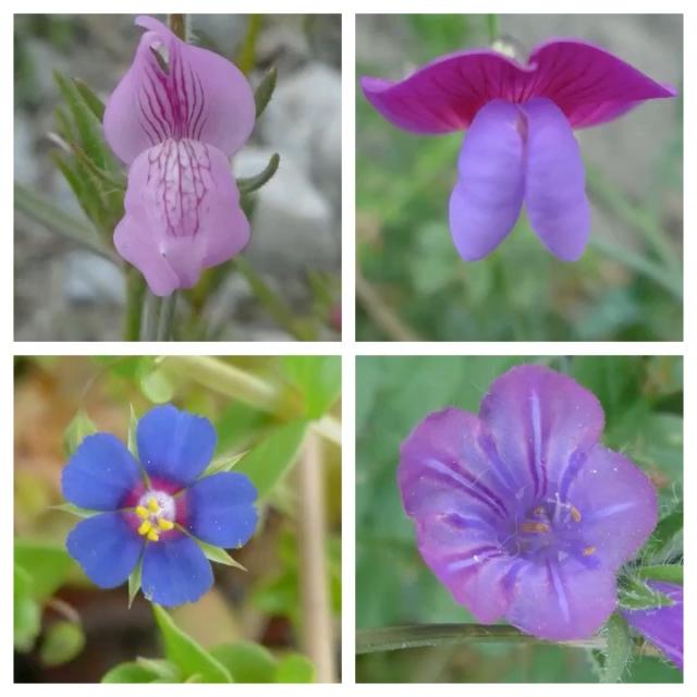 flower pic 8