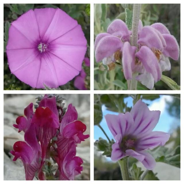 flower pic 9