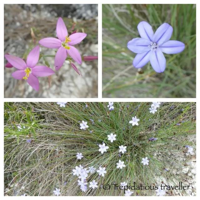 flower pics_1